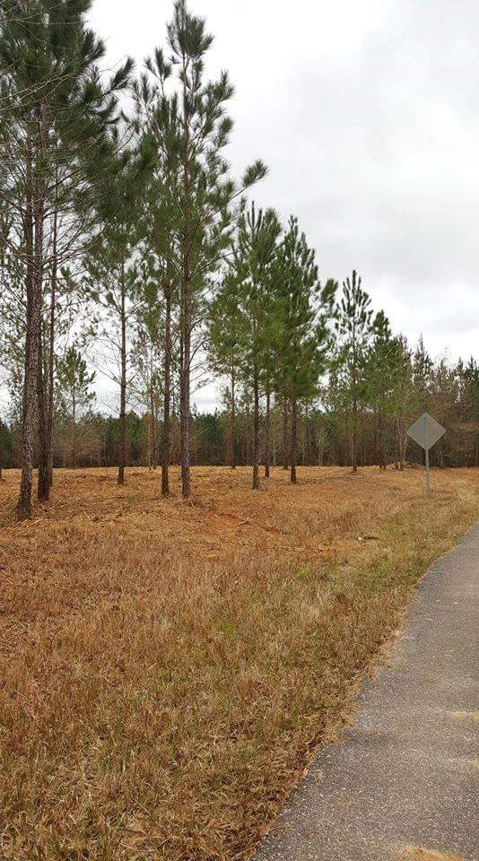 Beautiful Recently Cleared Acreage for your Mobile Home, Tiny Home or RV!